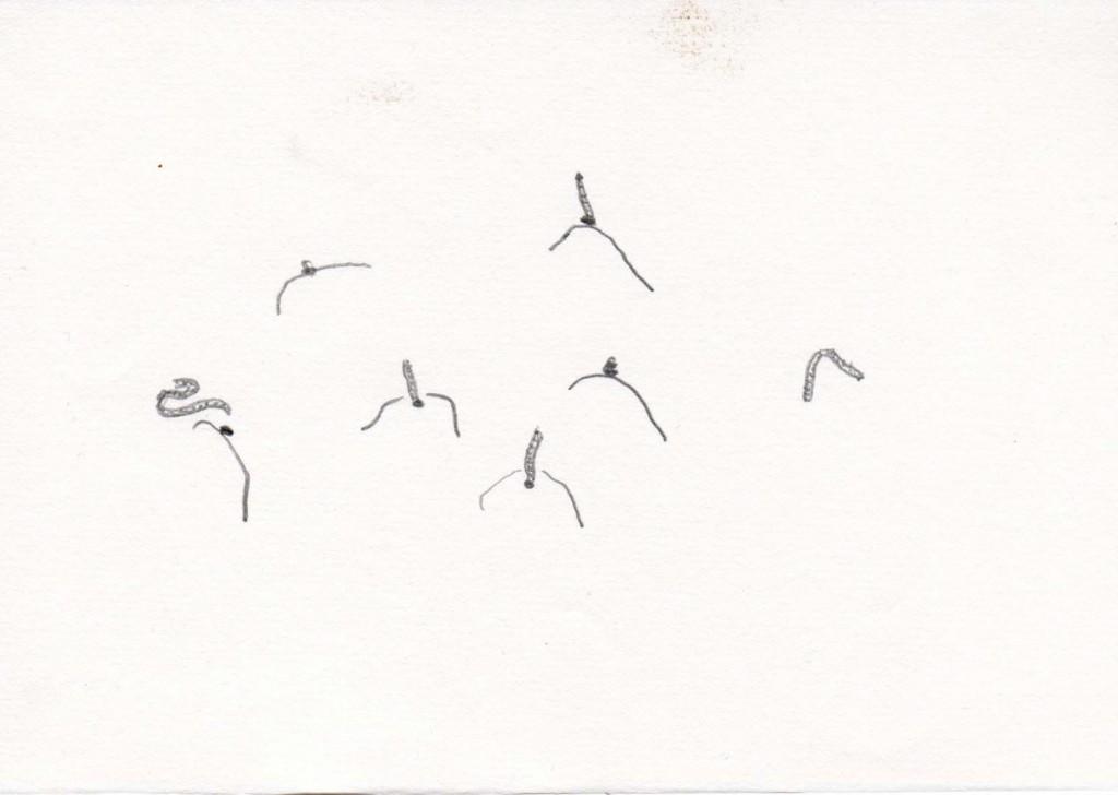 vers de terre, feutre, 10 x 15 cm, 2006.